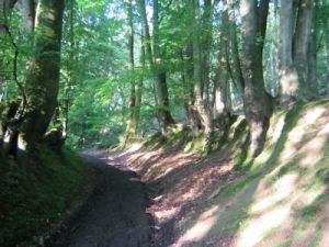 The walking path in Hammer Wood